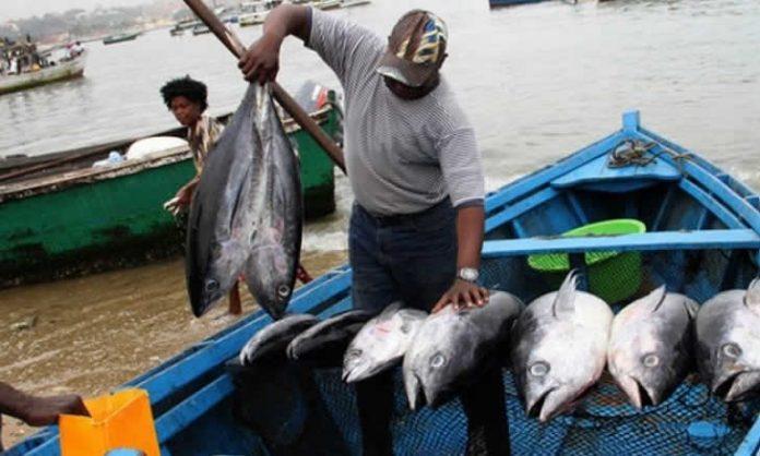 Actualmente os cidadaos consomem muito pouco peixe e abaixo da media recomendada pela OMS